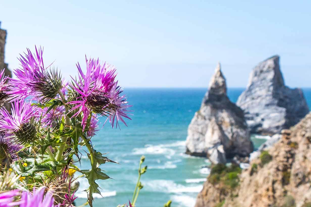 Surfen in Portugal in wunderschöner Natur